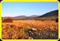 Didim Akbük Yeşiltepe'de 5 Dönüm Çiftlik Arsası İmarlı