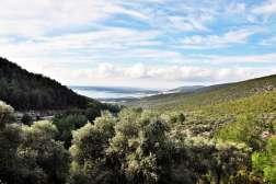 Akbükte Satılık Zeytinlik, Kazıklı Yolu Üzerinde