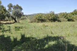 Muğla Milas Kazıklıda Satılık 975 m2 Arsa