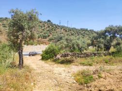 Milas Pınarcık'ta Bodrum Yoluna Yakın Zeytinlik 2100 m²