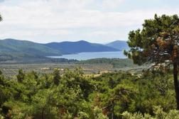 Muğla Milas Kazıklı'da Satılık Deniz Manzaralı 9 Dönüm Zeytinlik