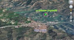Milas Bafa Köyü Satılık Zeytinlik 10 Dönüm